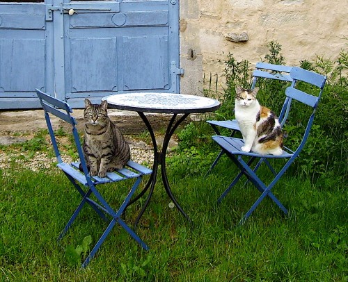 chats, photo, picture, cats, blue, bleu, french, campagne, maison, mosaique