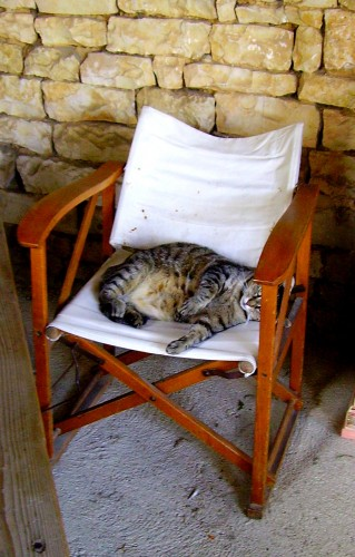chat, cat, coussin, trompe l'oeil, cushion,