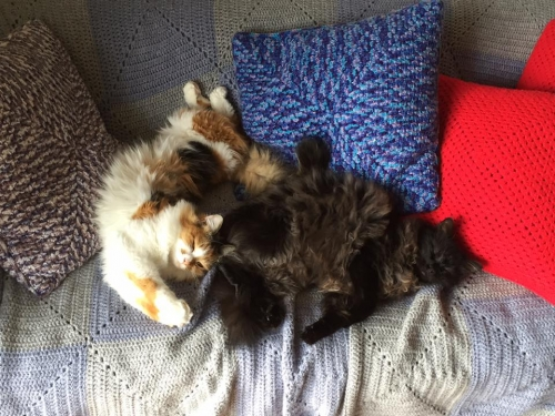 laine, tricot, coussin, chat, cats, pillow, knitting machine, machine à tricoter,