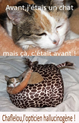 chat, chit, lit, couchage, coussin, maison, cosy, cute, lovely, cat, dog, fun, girafe, animal,